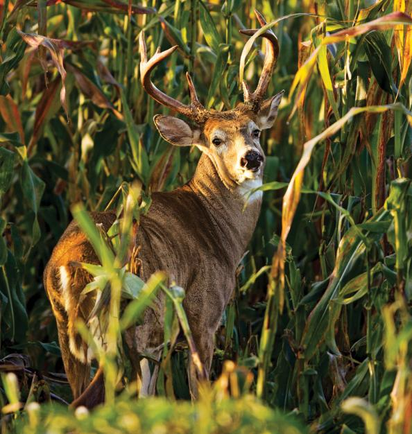 Are Genetically Modified Crops a Threat to Wildlife?