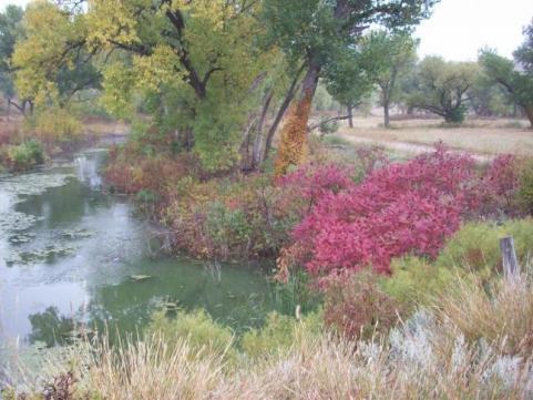 httpswww.outdoorlife.comsitesoutdoorlife.comfilesimport2014importImage2009photo7Decfoliage_48.jpg