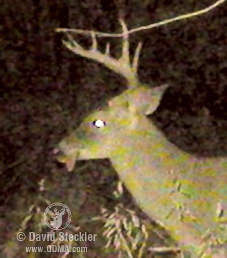 This buck took a beating.