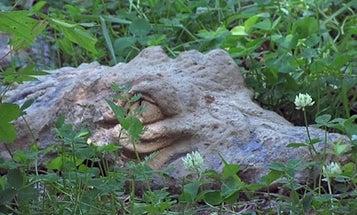 Missouri Cop Shoots Cement Gator – Twice