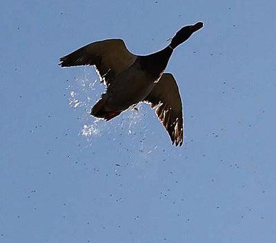 httpswww.outdoorlife.comsitesoutdoorlife.comfilesimport2014importImage2008legacyoutdoorlifetower_shots_10.jpg