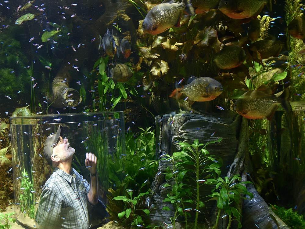 """Piranhas"