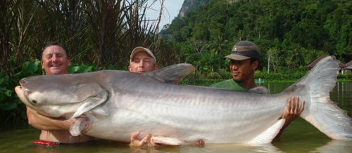 Welsh Angler Catches World Record Giant Mekong Catfish