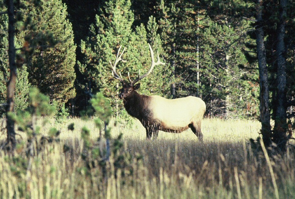 httpswww.outdoorlife.comsitesoutdoorlife.comfilesimport2014importImage2010photo6elk.jpg