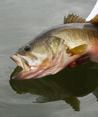 Summer Bass Fishing: Tips, Tactics, and Gear for Catching Monster Bass