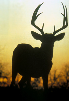 Lessons of the Hunt: Have a Backup Plan