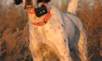 6 Pointers for Pointer Pups