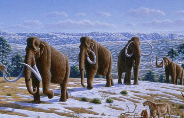 Early Hunters Not to Blame For Woolly Mammoth Extinction