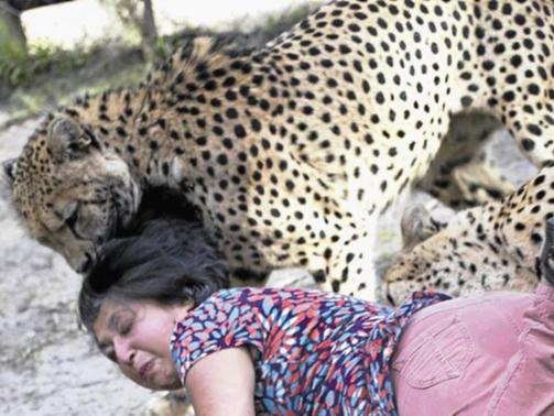 British Woman Attacked by Cheetahs at Game Reserve, Husband Snaps Photos