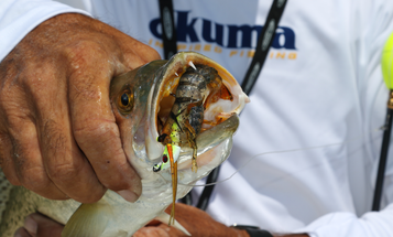 Should You Use Artificial or Natural Shrimp for Inshore Fishing?