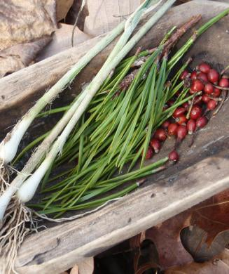 Wild Food Guide: How to Identify the Best Wild Edible Foods