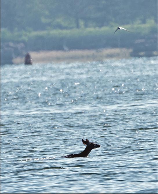 httpswww.outdoorlife.comsitesoutdoorlife.comfilesimport2014importBlogPostembed545_Deer_Ocean.jpg