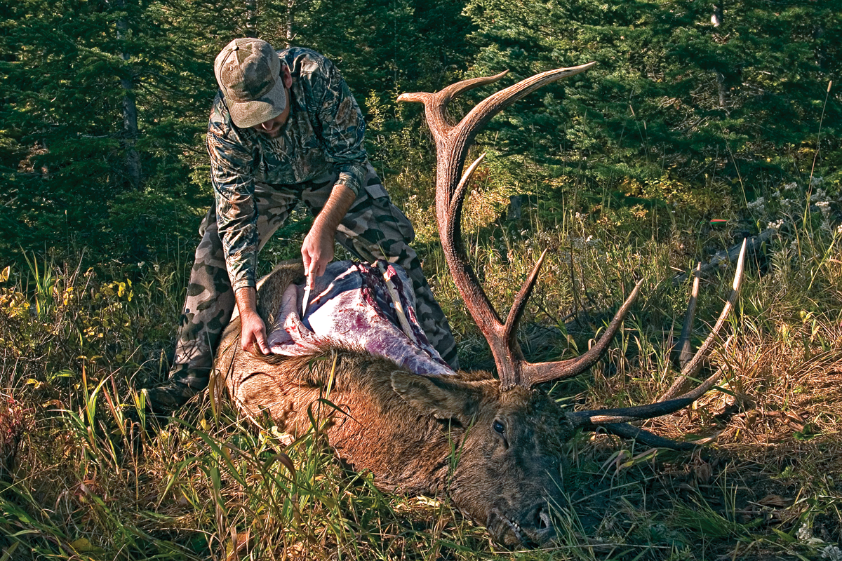 Cape and Meat Care: How to Keep Backcountry Game Fresh After the Kill