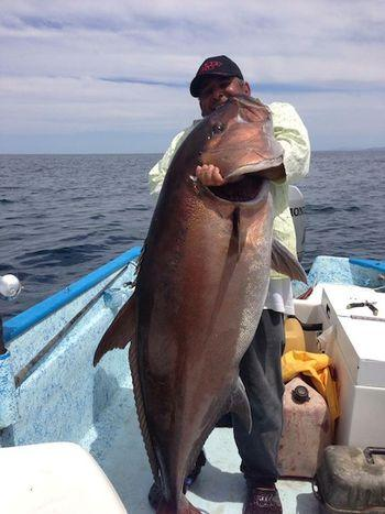 Monster Amberjack Could Have Challenged World Record