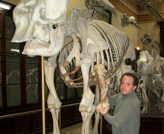 Ancient Bear Weighed Nearly Two Tons