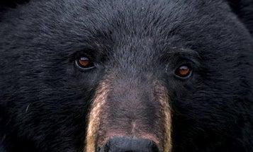 Spot-and-Stalk Black Bear Hunting Tips