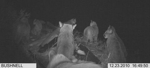 A Wild Week for Trailcams