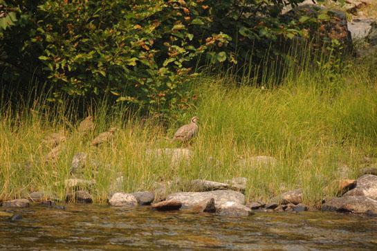 httpswww.outdoorlife.comsitesoutdoorlife.comfilesimport2014importBlogPostembedsalmonriver8.JPG