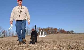 Shed Hunting: Advanced Pattern Field