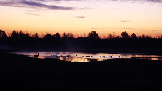 Public Land: Hunting and Fishing in Illinois