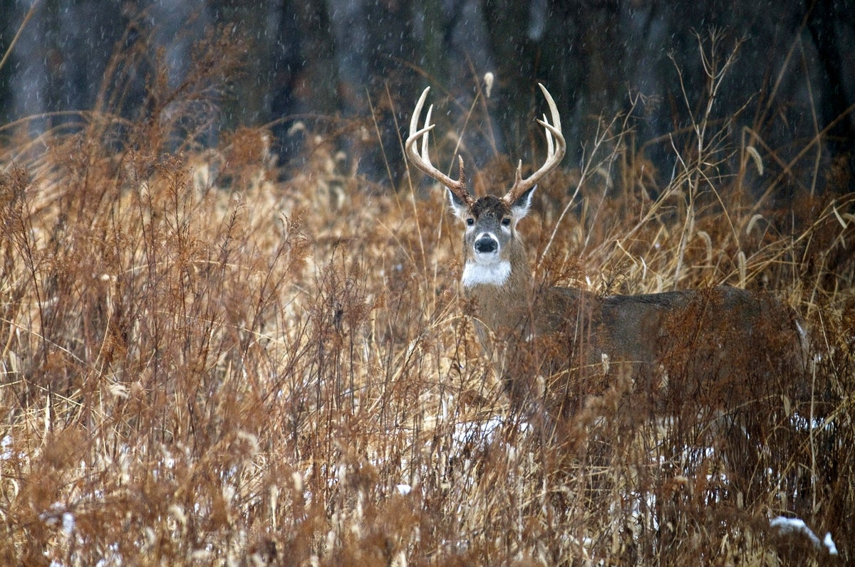 "Natural Food Plots: How to ""Grow"" Them This Winter and Why They Work"