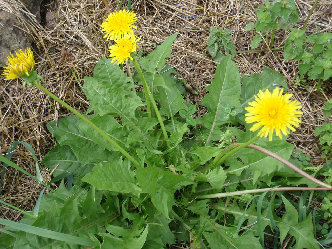 Survival Skills: Find Wild Edible Plants, Worldwide