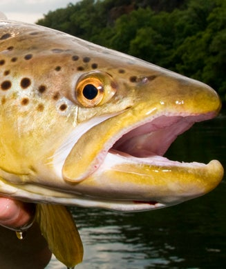 Top Trout Lures: Best Trout Fishing Baits of All Time
