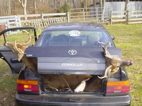 Toyota Corolla deer hauler.