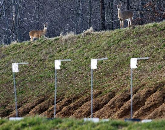 Deer Find a Home on FBI Shooting Range