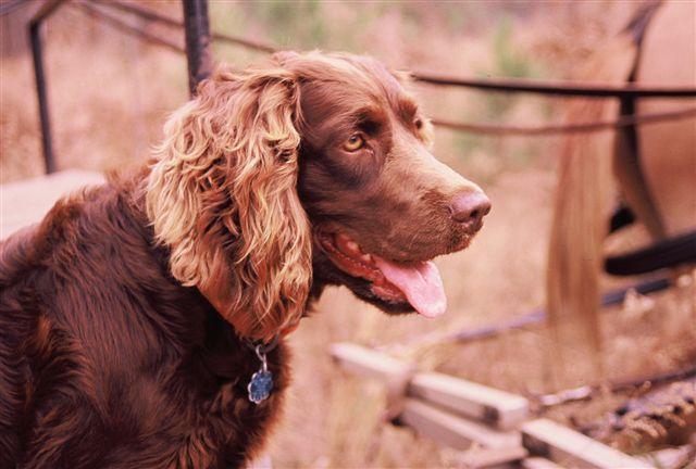 httpswww.outdoorlife.comsitesoutdoorlife.comfilesimport2014importImage2009photo725._South_Carolina.jpg