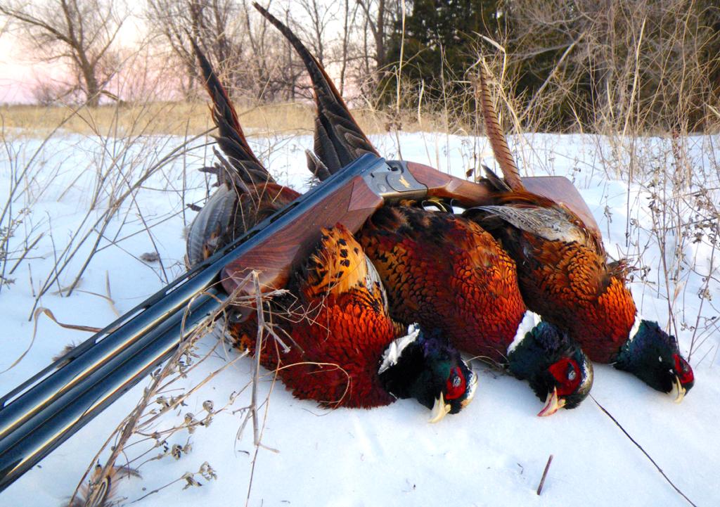 snowy pheasants