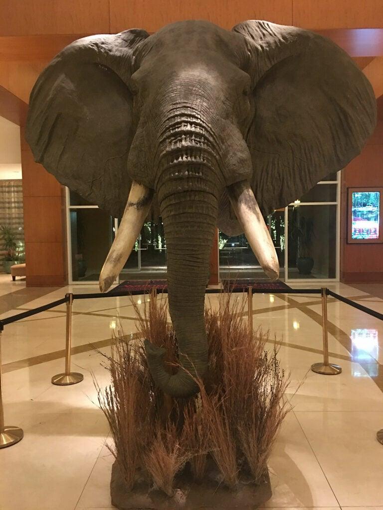 elephant taxidermy