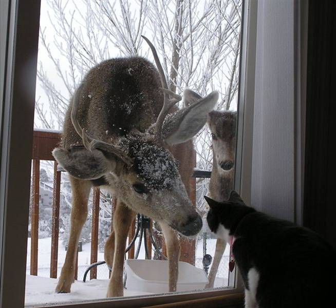 This young buck has clearly never seen a cat before.