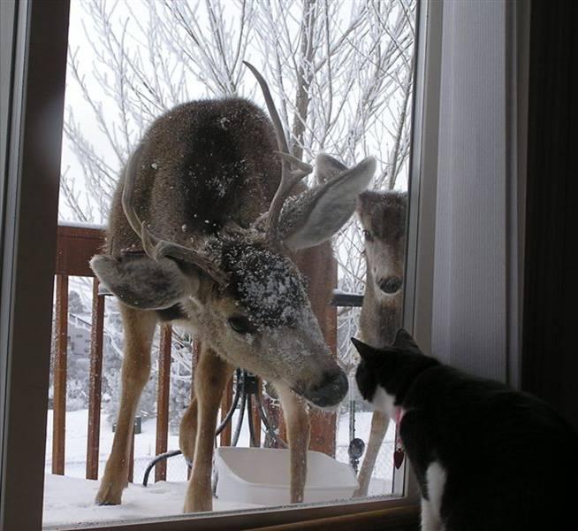 httpswww.outdoorlife.comsitesoutdoorlife.comfilesimport2013images2010095_Deer-and-Cat-730667_0.jpg