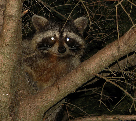 Trapping Tips: Use the Right Bait For Each Critter