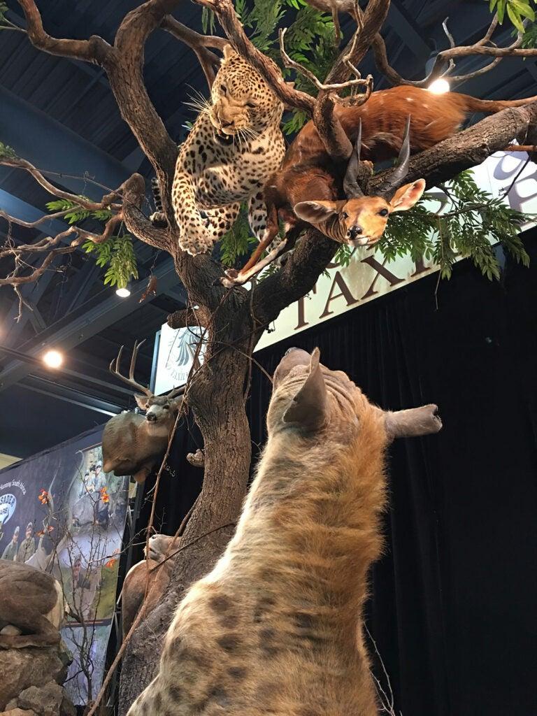 leopard in tree mount