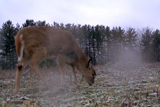 Rut Tracker 2012: Deer Are Where They Eat