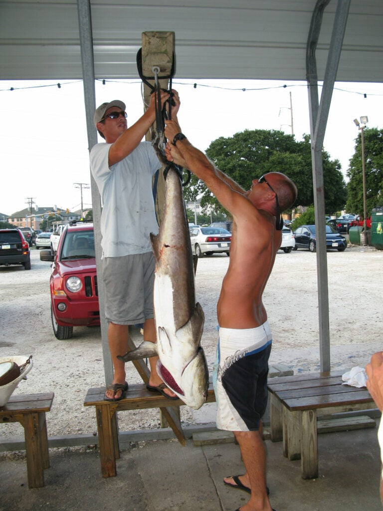 httpswww.outdoorlife.comsitesoutdoorlife.comfilesimport2014importImage2010photo30010Jason_and_Rudy_hoist_the_cobia_for_a_photo_session.jpeg