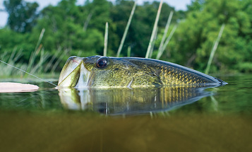 5 Native Weeds We Like and How to Fish Them for Big Bass