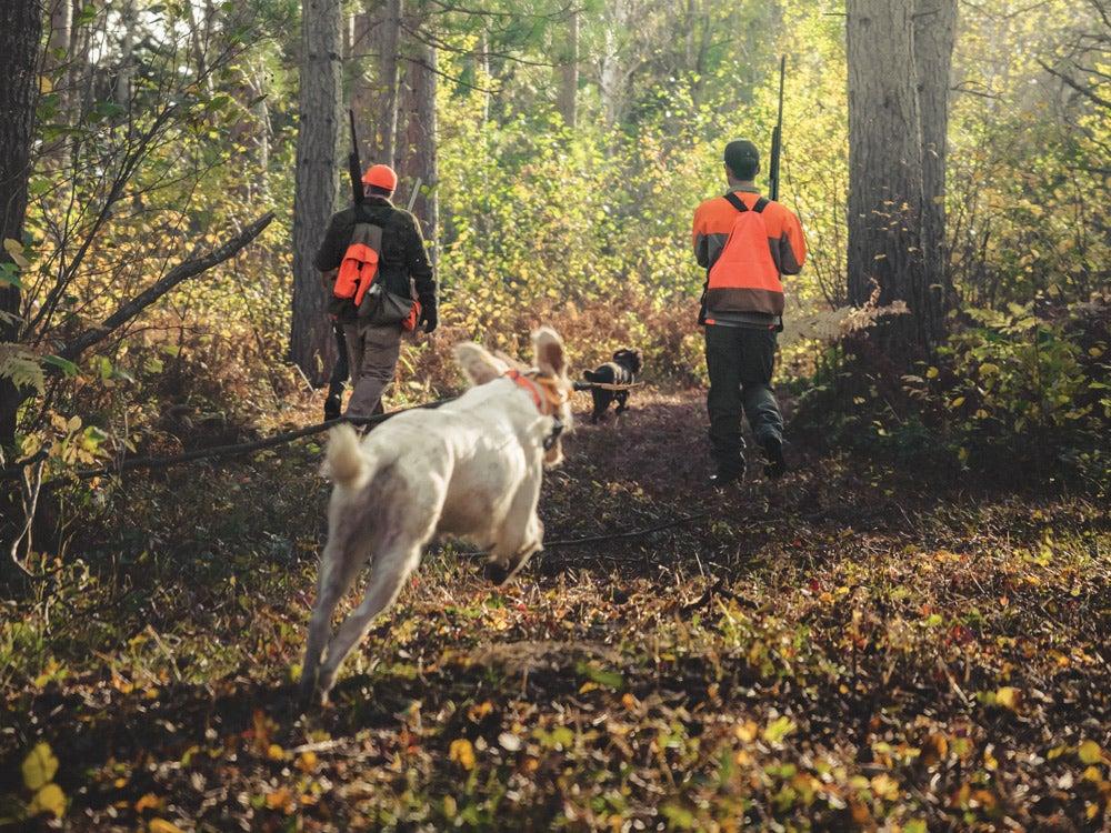 hunting dog running behind hunters