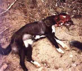 httpswww.outdoorlife.comsitesoutdoorlife.comfilesimport2014importImage2009photo7wolves_dogs_3.jpg