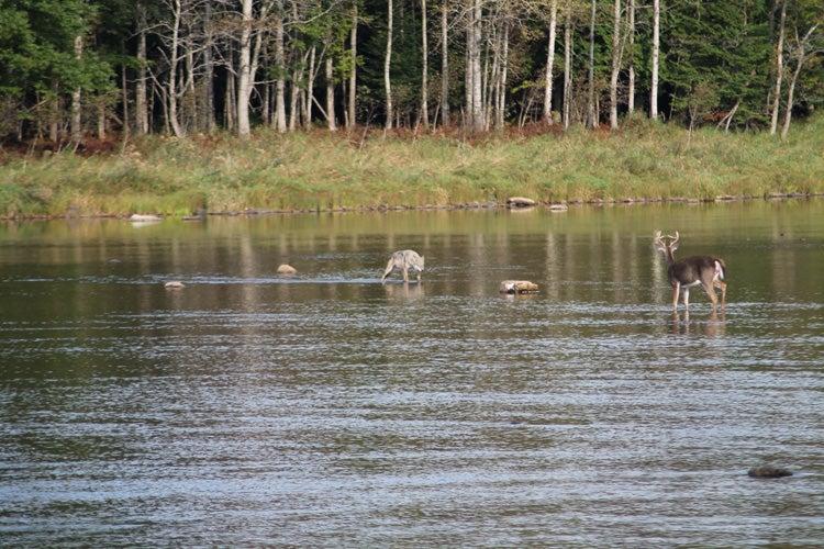 httpswww.outdoorlife.comsitesoutdoorlife.comfilesimport2013images2012105._Deer_Wolf_sm.jpg