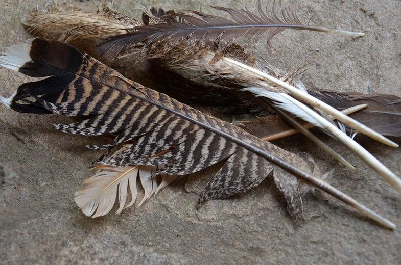 turkey feathers on stone