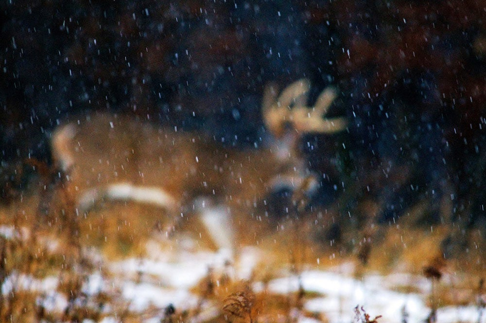 snow whitetail buck