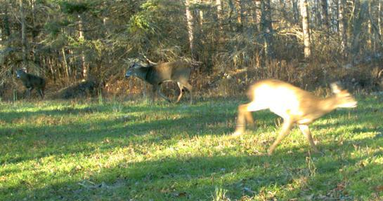 The Rut Tracker 2012: Breeding Behavior Still Underway