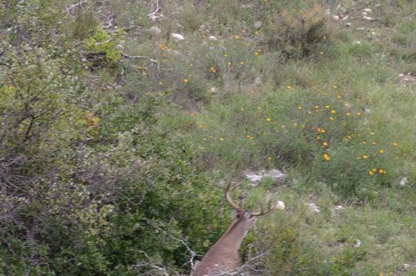 httpswww.outdoorlife.comsitesoutdoorlife.comfilesimport2014importImage2010photo30010FordRanch_099.jpg