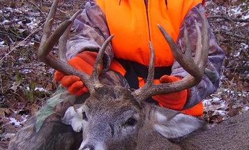 More Deer of the Year
