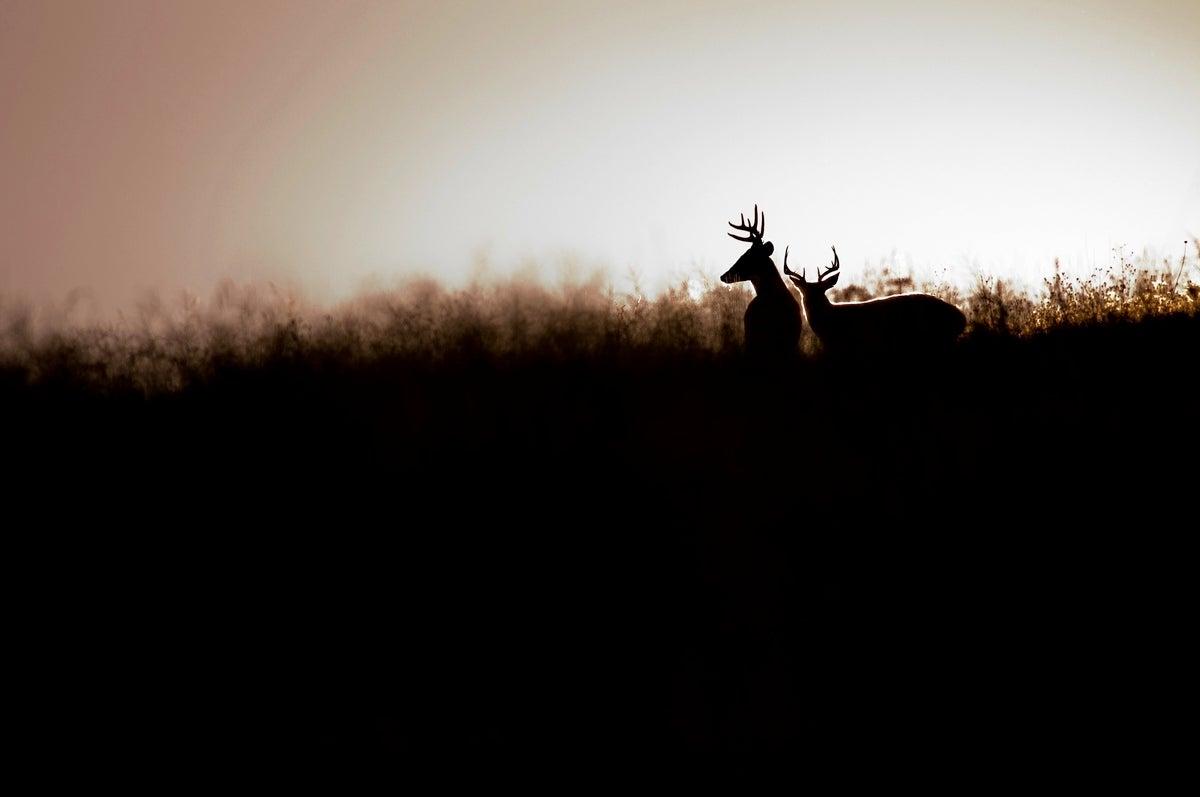 The Fall Dispersal Phenomenon: Where Did All the Bucks Go?