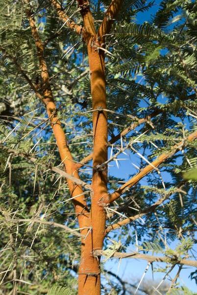 httpswww.outdoorlife.comsitesoutdoorlife.comfilesimport2014importImage2009photo7_DSC0223.jpg