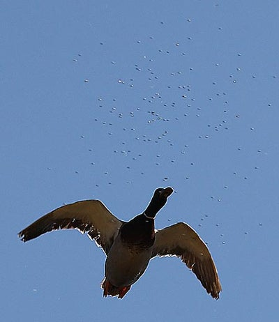 httpswww.outdoorlife.comsitesoutdoorlife.comfilesimport2014importImage2008legacyoutdoorlifetower_shots_11.jpg